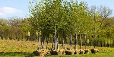 tree planting service Welwyn