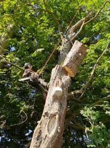 Tree rigging